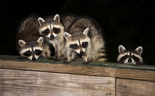Wildlife Removal and Control - Sugarland Exterminating