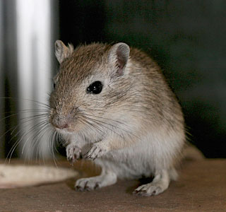 Rodent Control - Sugarland Exterminating